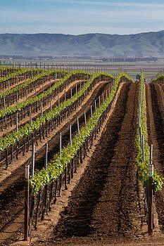 Roger Mullenhour - California Vineyard