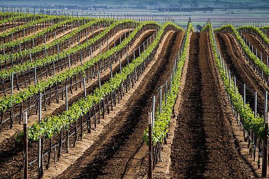 Roger Mullenhour - California Vineyards