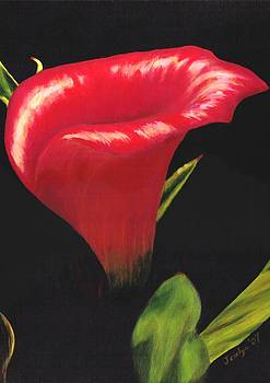 Calla Lily by Jesslyn Fraser