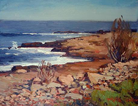 Calm Coast by Dianne Panarelli Miller