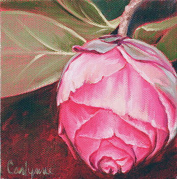 Camelia by Carlynne Hershberger