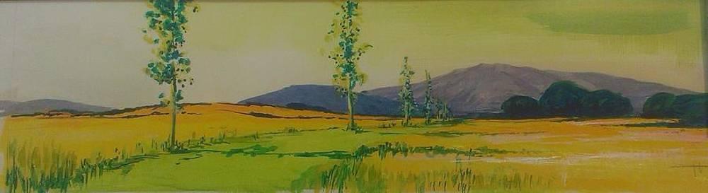 Cami Del Nord A L'estiu by Josep Roig