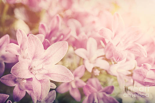 Mythja  Photography - Campanula floral background