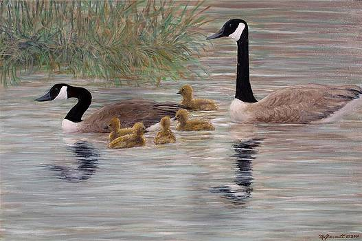 Canada Goose Family by Kathleen McDermott