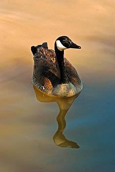 Tam Ryan - Canada Goose