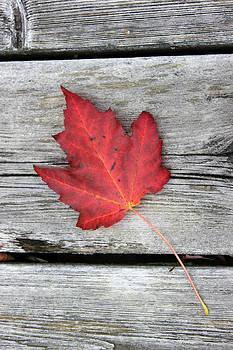 Canada by Rob Merriam