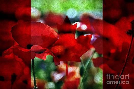 Andrea Kollo - Canadian Eh