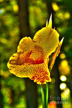 Canna WOW by Kim Pate