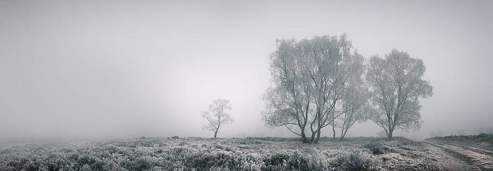 Cannock Chase by Andy Astbury