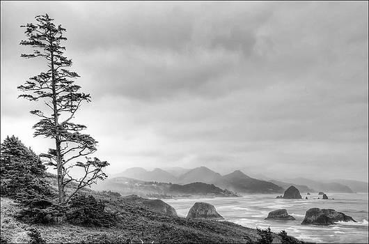 Canon Beach  by Geraldine Alexander