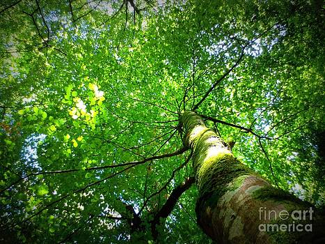 Canopy by Kiana Carr