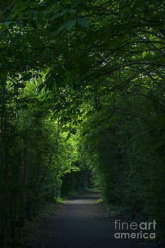 Svetlana Sewell - Canopy Trees