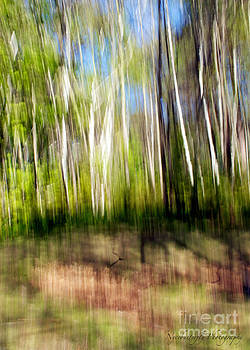 Can't See the Forest Through the Trees by Kimberly Nyce