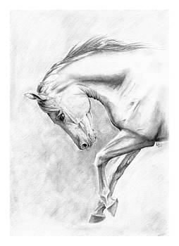 Canter by Liz Oliver