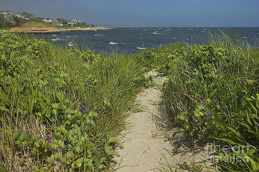 Amazing Jules - Cape Cod Beach Path