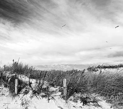 Michelle Wiarda - Cape Shore