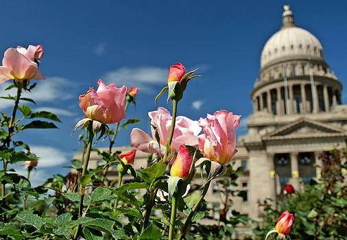Capitol Roses by Greg Bush