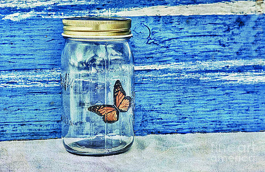 Captured Butterfly by Lori Frostad