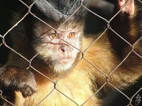 Captured Monkey by Brooke Fuller