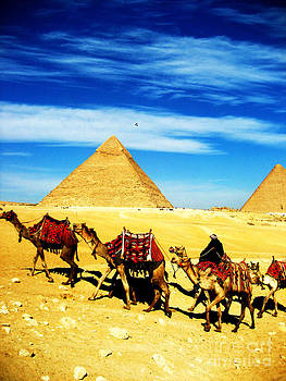 Caravan of Camels 2 by Alison Tomich