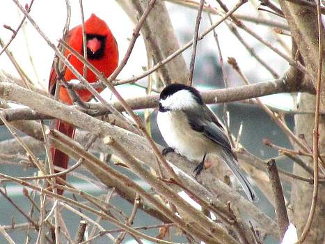 Cardinal and Chickadee in a Lilac Tree by Carolyn Mortensen