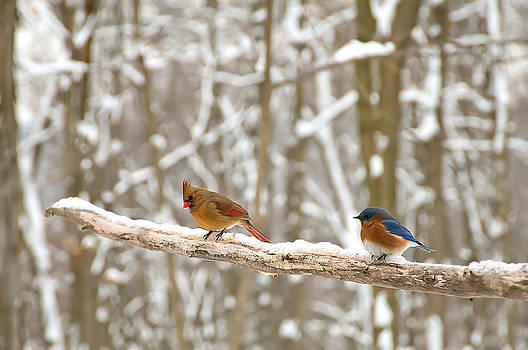 Randall Branham - Cardinal Bluebird and Snow Limb