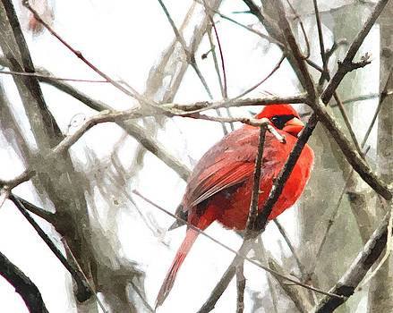 Cardinal in Winter by Jim Johnson