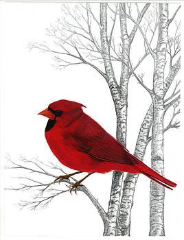 Cardinal Natures Beauty by Linda Francis