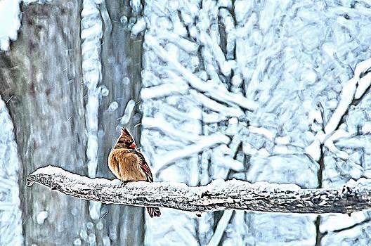 Randall Branham - CARDINAL NO MATE TO KEEP WARM