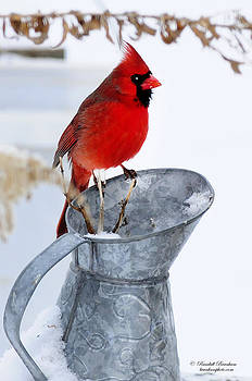 Randall Branham - Cardinal on Water can Winter