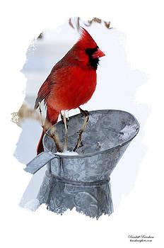 Randall Branham - Cardinal on Water can Winter Scene