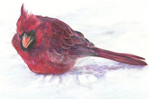 Cardinal study by Meagan  Visser