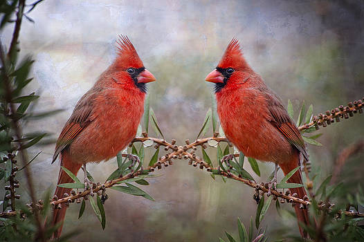 Cardinals in Bottlebrush by Bonnie Barry