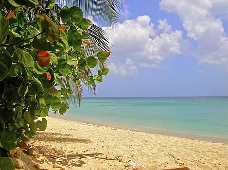 Jennifer Lamanca Kaufman - Caribbean View