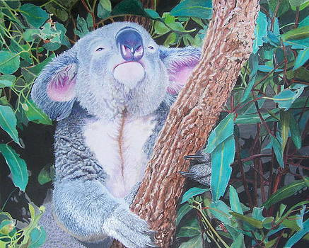 Carmen's Koala  by Constance Drescher