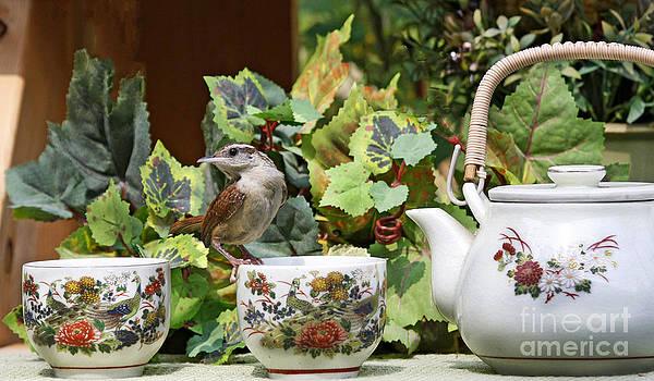 Carolina Wren and Tea Photo by Luana K Perez