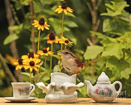 Carolina Wren and Tiny Tea Time by Luana K Perez
