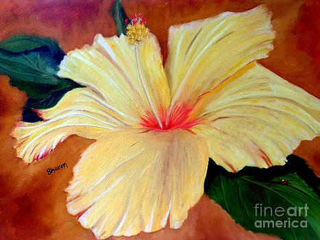 Carols Hibiscus by Sharon Burger