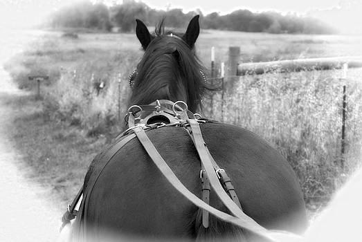 William Havle - Carraige View Horse
