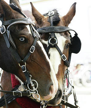 Linda Knorr Shafer - Carriage Horse - 4
