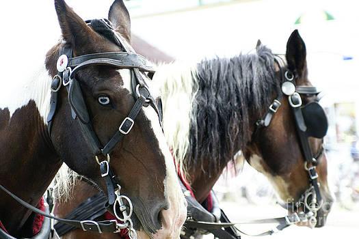 Linda Knorr Shafer - Carriage Horse - 5