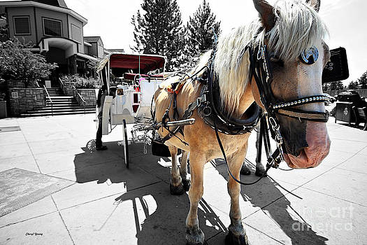 Cheryl Young - Carriage Horse