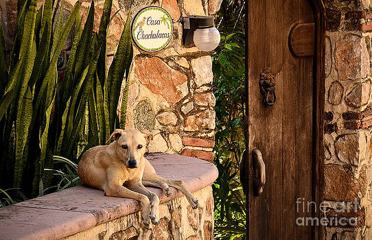 Casa Chachalacas by Amy Fearn