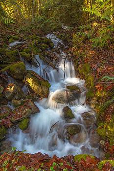Cascade 41 by Daryl Hanauer