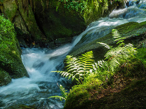 Cascading creek - Silberbachtal no 8 by Martin Liebermann