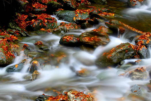 Cascading Stream by Suzanne DeGeorge