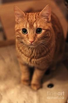 Cat by Anatoliy Tarasiuk