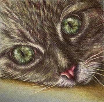 Cat Component by Lisa Marie Szkolnik