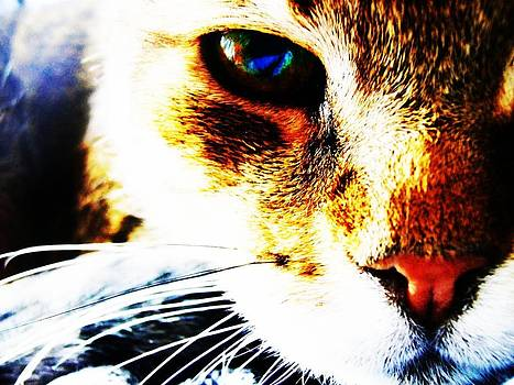 Cat Effects by Noah