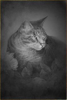 Cat by Ilona Stefan